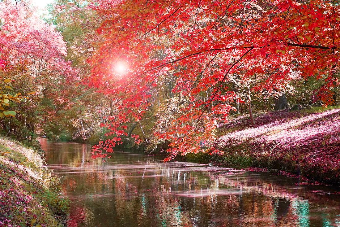 Herbst – Leuchtende, rote Bäume und Blätter neben Fluß