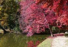 Herbst / leuchtender Baum am See
