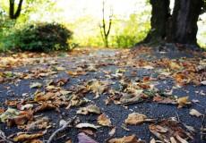 Herbst Laub