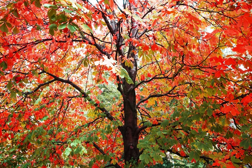 herbstbaum-gruen-rot