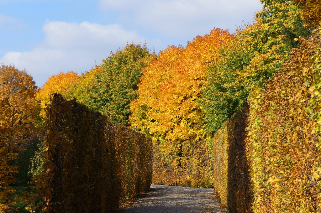 Herbstlabyrinth – Park