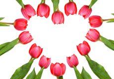 Blumen / Herz aus Tulpen – Tulpenherz