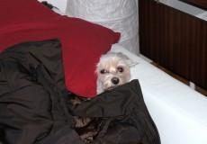 Hund hat angst vorm gassi gehen