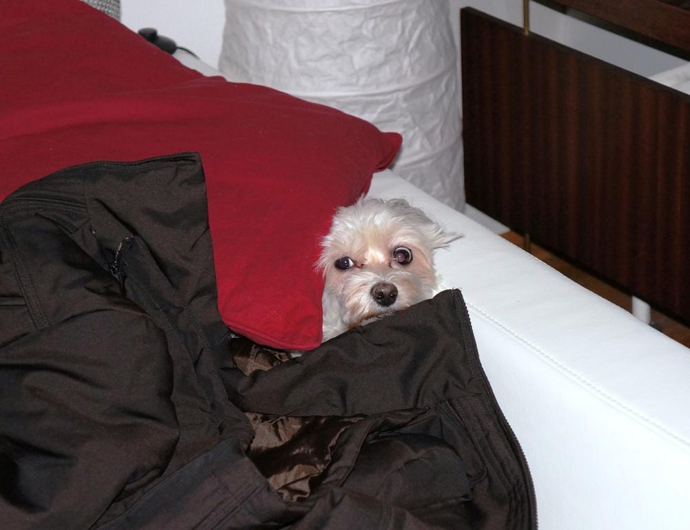hund hat angst lizenzfreie fotos bilder kostenlos herunterladen ohne anmeldung. Black Bedroom Furniture Sets. Home Design Ideas