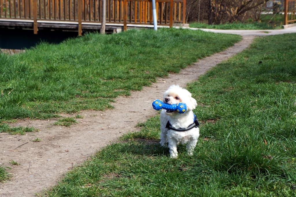 hund-mit-spielzeug