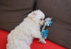 Hund schläft neben Spielzeug