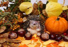 Herbstlandschaft mit Igel