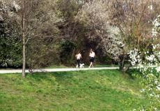 Jogger mit Hund Frühling