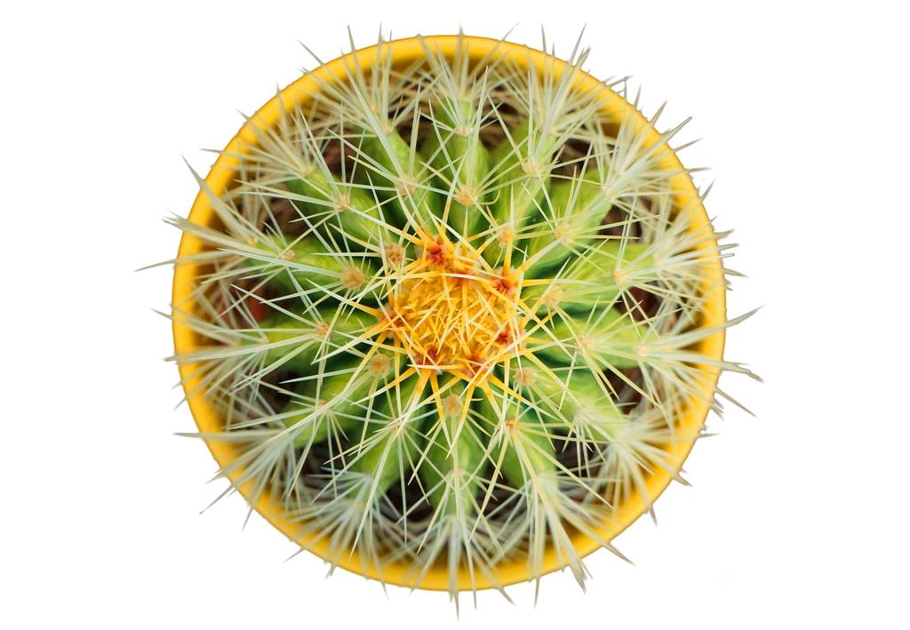 Kaktus 2D