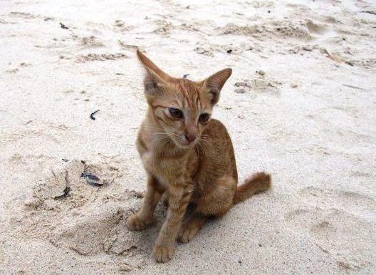 Katze Indonesien