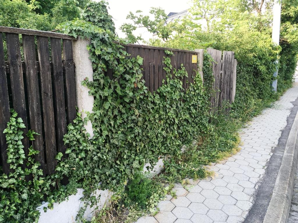 Kletterpflanze Zaun Sichtschutz
