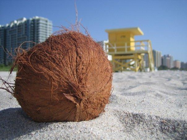 kokosnuss miami beach