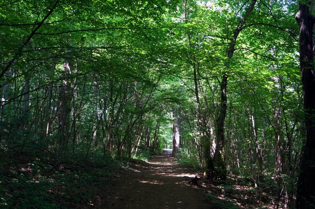 Weg durch Laubwald