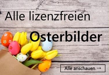 Frohe Ostern Osterhase Hinter Tulpen Blumen Lizenzfreie Fotos