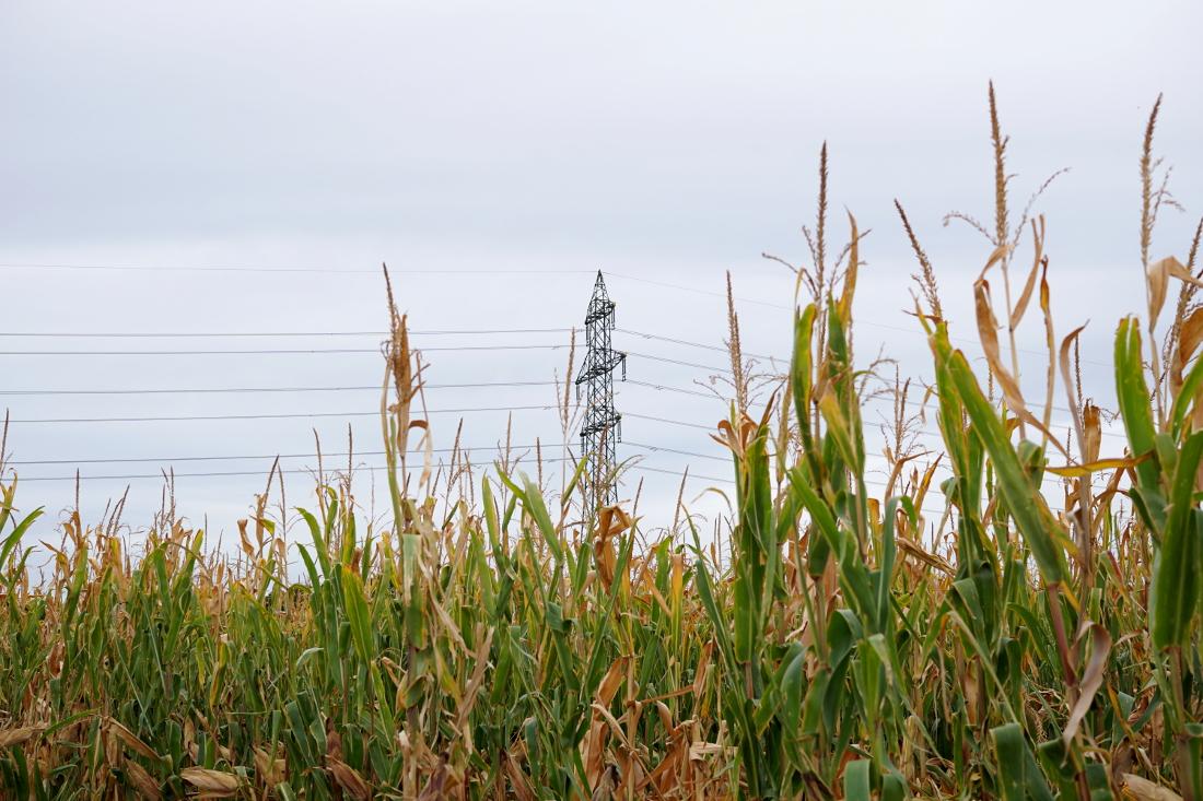 Maisfeld Strommasten