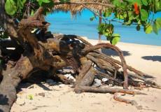Mangroven Karibik Kuba