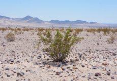 Kalifornien Mojave Wüste