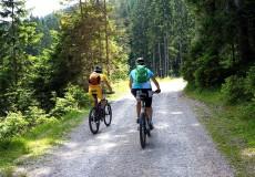 Mountainbiker im Wald/Alm