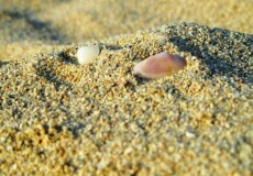 Muscheln Strand