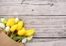 Ostern – gelbe Tulpen und Ostereier / Blumen