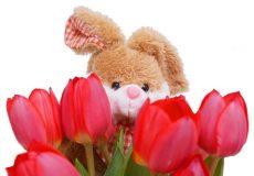 Frohe Ostern – Osterhase hinter Tulpen / Blumen