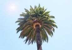 Urlaub Strand Palme