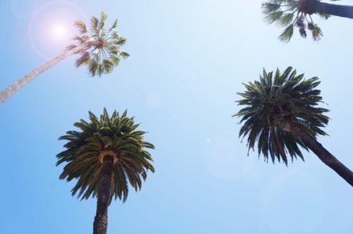 palmen-sommer