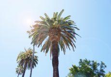 Urlaub Palmen