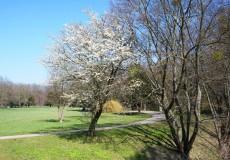 Park im Frühling / Frühjahr