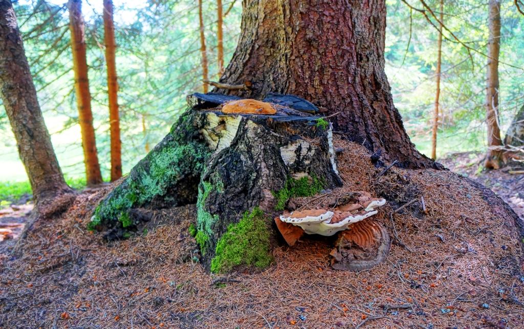 Pilz Baum