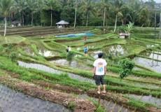 Plantagen Felder Indonesien