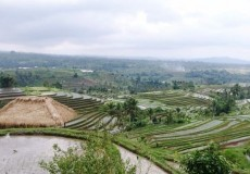 Plantagen Felder Indonesien 1