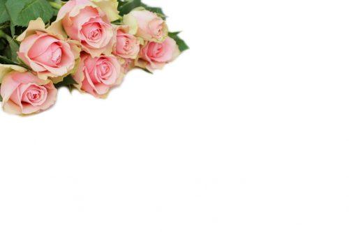 Rosen Rosen Wallpaper