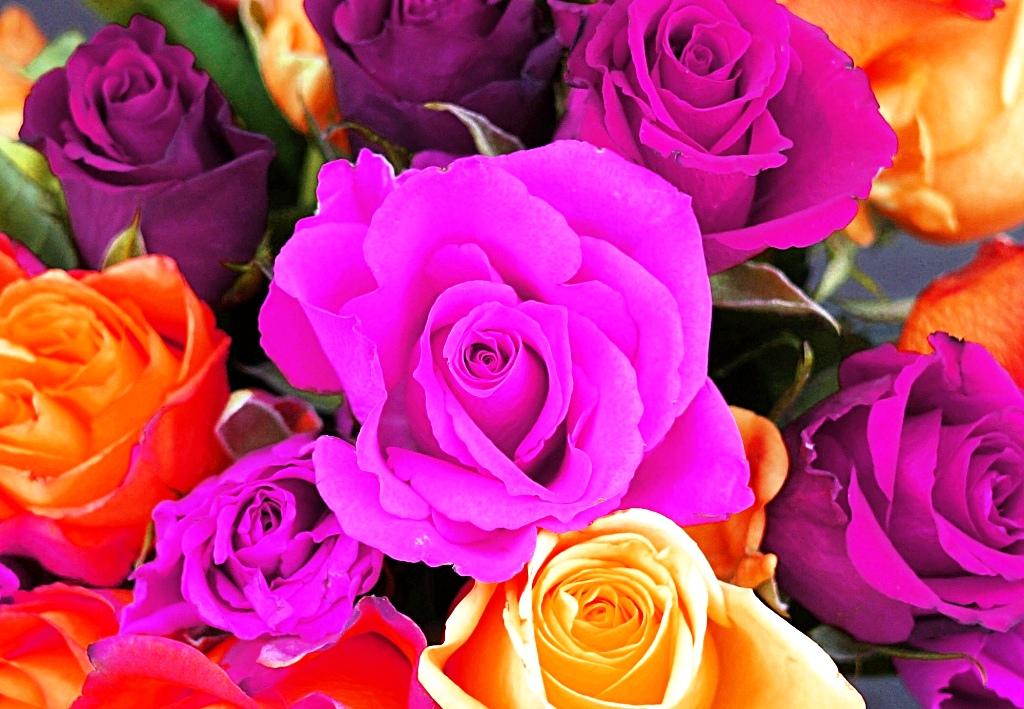 Blumen / Rosen in seltenen Farben