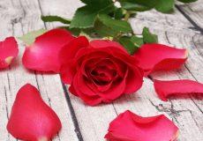 Blumen / rote Rose liegt auf holztisch