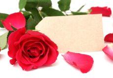 Rote Rose mit Platzhalterkarte für Text