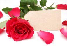 Rote Rose mit Platzhalzerschild für Text