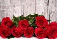Rote Rosen liegen vor Holzwand