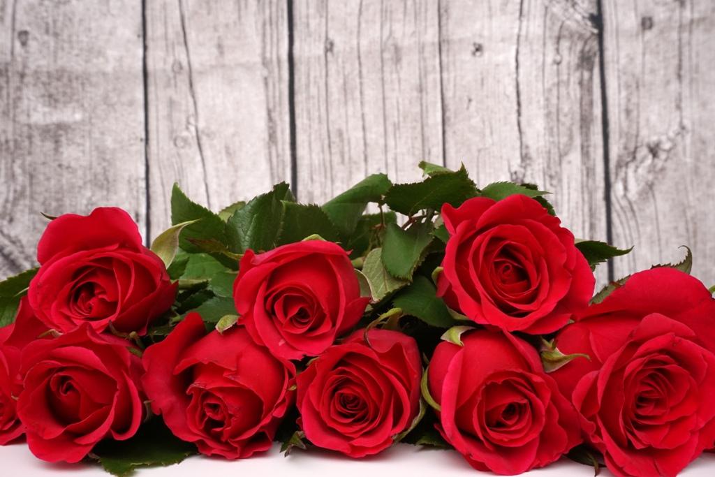 Blumen / Rote Rosen liegen vor Holzwand