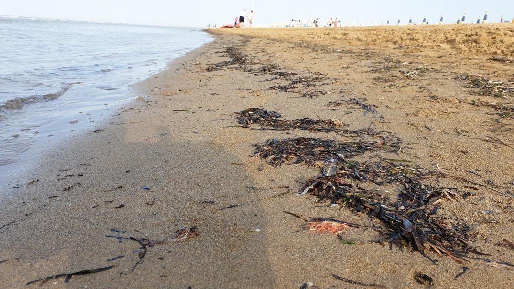 Seegras Algen am Strand