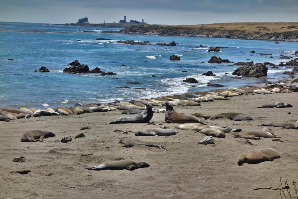 Seelöwen Strand Kalifornien
