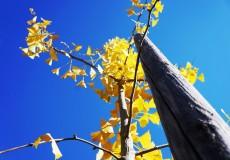 Sonnentag Herbst