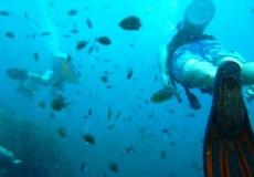 Taucher Fische