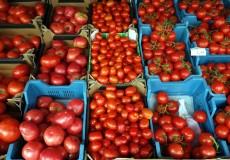 Tomaten – Wochenmarkt