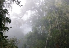 Urwald Indonesien