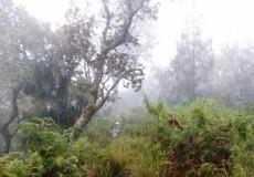 Urwald Indonesien 1