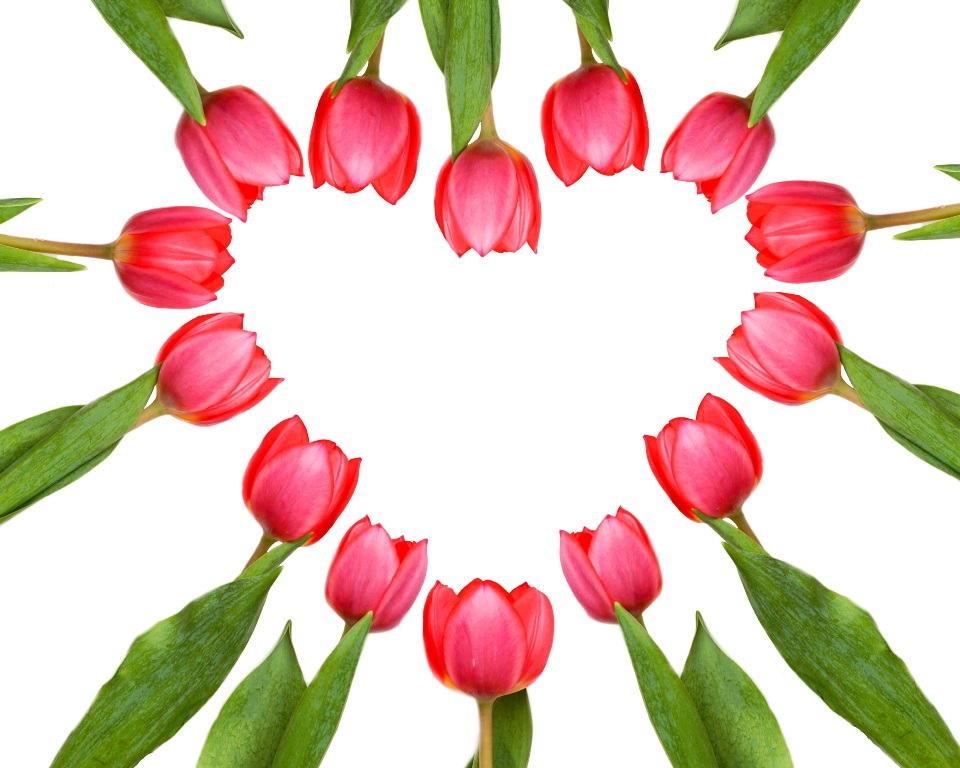 Valentinstag / Herz aus Tulpen