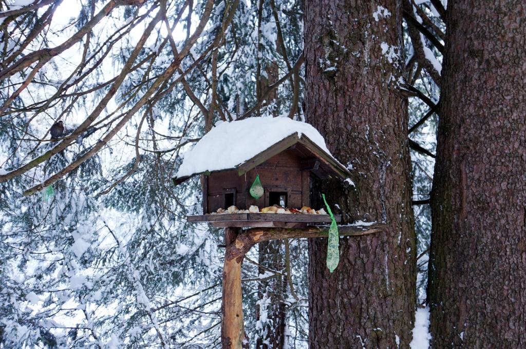 vogelhaus im winter lizenzfreie fotos bilder kostenlos herunterladen ohne anmeldung. Black Bedroom Furniture Sets. Home Design Ideas