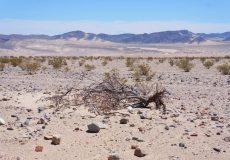 Wüste Kalifornien 1