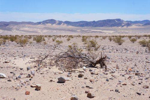 Wüste Kalifornien